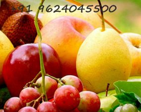 Fruits Vegetables POS billing  Software
